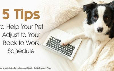 5 Tips to Help Your Pet Adjust to Your Back to Work Schedule