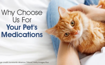 Why Choose Us For Your Pet's Medications